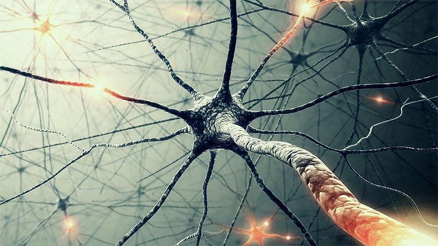 neiroset